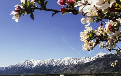 Carson Valley, as much or as little as you prefer